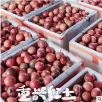 【海南百香果】台农紫香8号新鲜百香果 当季时令水果现摘 5斤包邮