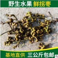 基地供应批发 鲜拐枣 水果枳椇 农家土特产