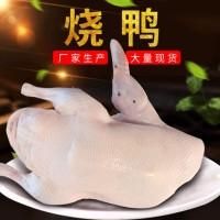 厂家批发烧鸭胚 樱桃谷鸭 白条鸭 酒店餐厅用烧鸭原材料胚