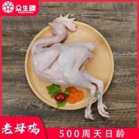 老母鸡冷冻鸡新鲜现杀鸡肉冻货农家散养鸡量大从优厂家直供