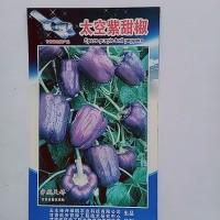 厂家直销 太空紫甜椒 20粒/袋 观赏兼食用