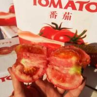 西红柿云南高原普罗旺斯西红柿新鲜自然熟5斤番茄蔬菜生吃大沙瓤