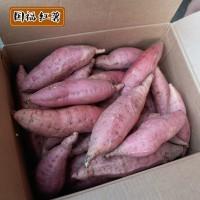 国福红薯基地供应新鲜烟薯25 沙地密薯 香甜软糯烤红薯用烟薯25