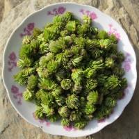 整朵杜仲雄花批发 现货新杜仲花每斤价格 一朵朵直接晒干原材料