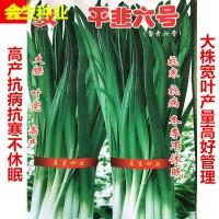 批发蔬菜种子 平韭六号韭菜种子 宽叶耐寒不休眠韭菜韭苔韭黄种子