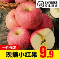 【顺丰果园直发】山西现摘红苹果新鲜水果批发非红富士苹果可代发