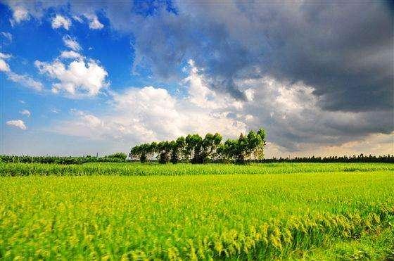 """第一产业投资增速连续8个月负增长 中国为农业投资注""""强心剂"""""""