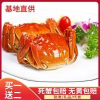 盘锦河蟹母蟹网兜装 鲜活大闸蟹红膏螃蟹 稻田蟹