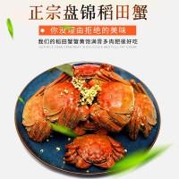 盘锦大米蟹 稻田大米基地直发大量批发 辽河润河蟹 新鲜螃蟹发货