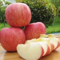 陕西红富士苹果脆甜多汁现摘苹果新鲜当季脆甜水果批发包邮一整箱