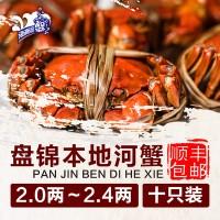 现货批发活河蟹 盘锦鲜活肥蟹大闸蟹 东北特产大闸蟹水产品