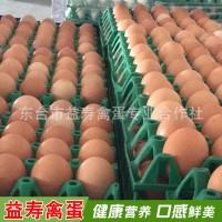 农家散养鸡蛋 新鲜洋鸡蛋 普通鲜鸡蛋 农家鸡蛋自养