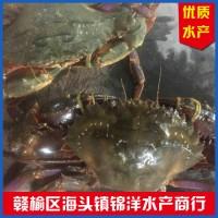 活石杂蟹 水产海鲜 鲜活石杂蟹批发