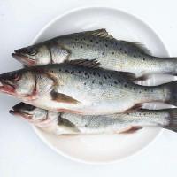 厂家直销 腌制冷冻海鲈鱼 开背海鲈鱼 酒店连锁餐饮家宴