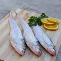 新鲜刀鱼 正宗刀鱼 冰鲜刀鱼 冻刀鱼 鲜美肉嫩