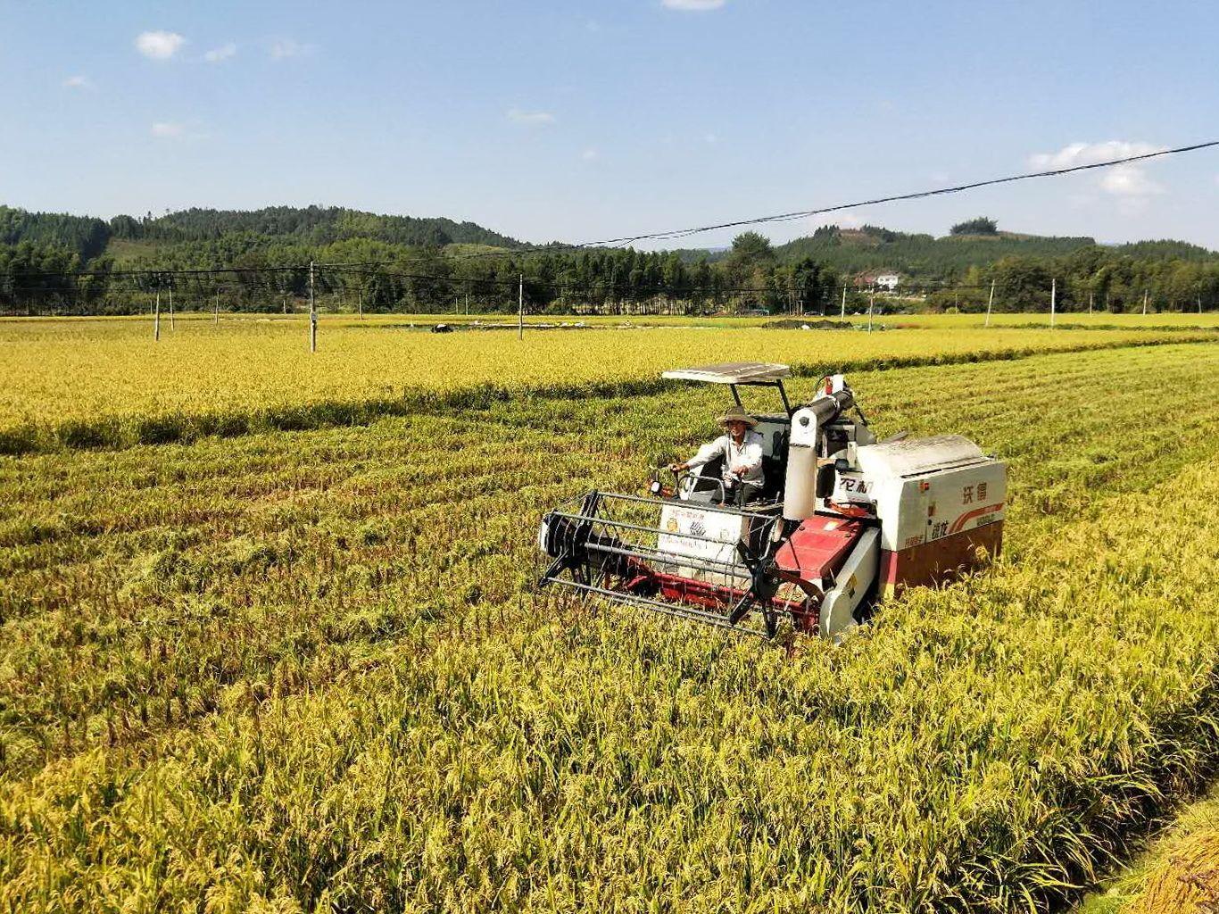 我国研发出经济适用型杂交水稻制种机械
