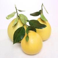 广西容县沙田蜜柚2斤5斤9斤新鲜应季水果柚子 白心柚非三红心蜜柚