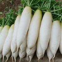 云南白萝卜生吃甜脆蔬菜类新鲜水果萝卜批发5斤带箱包邮