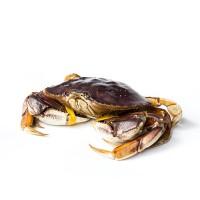 深海之家供应冰鲜水产海鲜珍宝蟹大螃蟹 外贸冰鲜冷冻珍宝蟹2斤