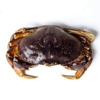 深海之家水产供应 鲜活珍宝蟹水产海鲜 外贸深海珍宝蟹