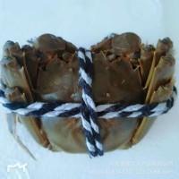 兴化水产养殖基地自产自销六月黄鲜活大闸蟹新鲜螃蟹2.4-2.1两母
