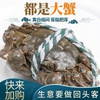 厂家直销螃蟹大闸蟹灰背外壳养殖鲜活肉质厚实量大从优