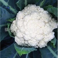 批发庆农65日青梗松花花椰菜种子 供应进口蔬菜种子高产花菜种子