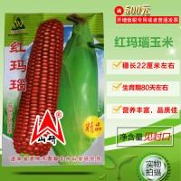 老品种红玉米种子红玉米粒农民自留原生种红玛瑙玉米种籽