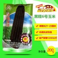 黑糯6号黑甜糯玉米种子农业大田黑糯玉米糯甜高产粘黑玉米种籽孑