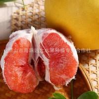 一件代发四川红心柚 蜜柚 新鲜水果孕妇三红柚 当季一件整箱发货