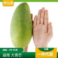 5斤越南大青芒 8斤套袋绿皮金煌芒 9斤新鲜水果青皮芒果 一件代发