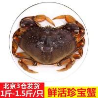 鲜活珍宝蟹膏蟹海蟹 黄道蟹海鲜大螃蟹母蟹水产鲜活大螃蟹黄金蟹