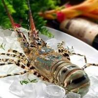 龙虾宴会 龙虾烧烤 龙虾料理 龙虾粉丝